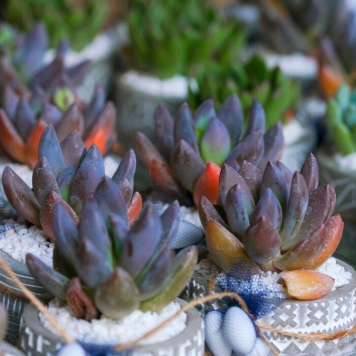 Succulents Bonbonniere Wedding Greece