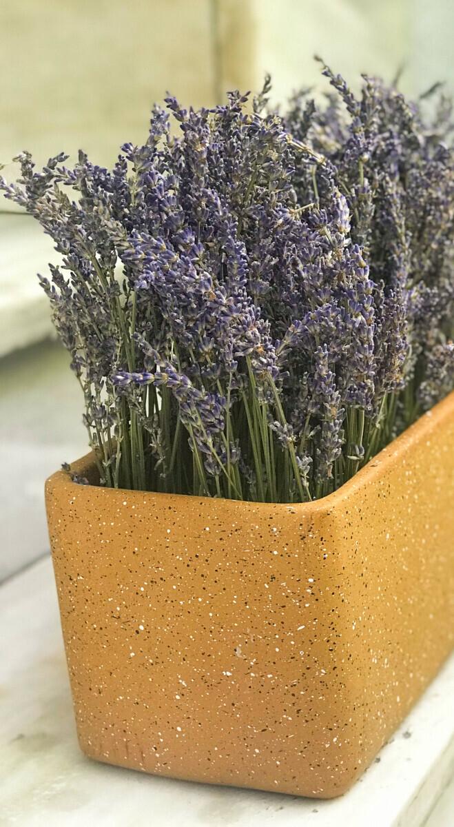 Cachepot Arrangement Dried Lavender